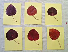 Yellow cards with dried pear leaves.