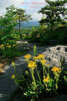 FRIENDS of the Blue Ridge Parkway Blue Ridge Parkway, River, Friends, Plants, Outdoor, Amigos, Outdoors, Plant, Outdoor Games