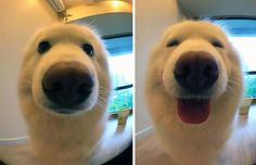 Before And After Being Called A Good Boy