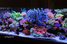 Saltwater Aquarium - Find incredible deals on Saltwater Aquarium and Saltwater Aquarium accessories. Let us show you how to save money on Saltwater Aquarium NOW! Coral Reef Aquarium, Saltwater Aquarium Fish, Saltwater Tank, Marine Aquarium, Freshwater Aquarium, Coral Reefs, Marine Fish Tanks, Marine Tank, Reef Aquascaping