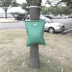 나무도 이렇게 영양제를 맞나보네?? 호강하는구먼~~!! ㅎㅎ