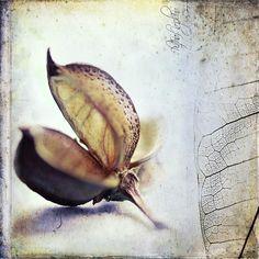 Nutshell and Leaf by Angela