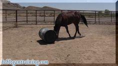 i love this horse so much!! Dozer by BobLogantraining. Dozer rolling barrel