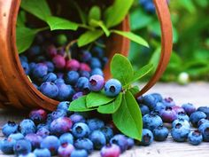 Blueberries help preserve memory function. They also can help hydrate the skin and other cells in the body
