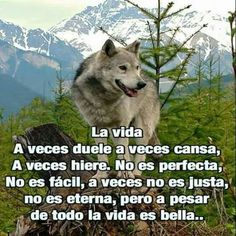 La vida Wolf Quotes, Animal Quotes, American Spirit Cigarettes, Maturity Quotes, Husky, Wolf Artwork, Quotes En Espanol, Wolf Love, Positive Inspiration