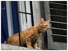 13 Meilleures Images Du Tableau Chatiere Chatiere