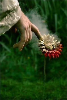 mano - flor
