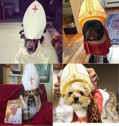 ο Πάπας ξεσηκώνει και τους σκύλους...