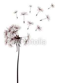 Wall Mural dandelions - Photo Wallpaper • PIXERSIZE.com