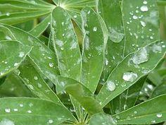 flores/con/lluvia - Buscar con Google