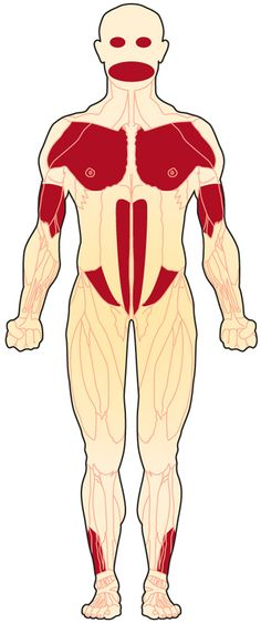 Muscles affected by FSHD (front view) Myotonic Dystrophy, Muscle Diseases, Muscles Of The Face, Muscle Disorders, Human Genome, Learn Something New Everyday, Muscular Dystrophies, Senior Activities, Ehlers Danlos Syndrome