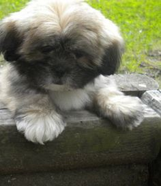_oh my gosh how cute!