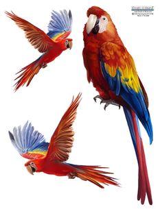 Create-A-Mural - Parrot Wall Sticker, $9.99 (http://www.create-a-mural.com/parrot-wall-sticker/)