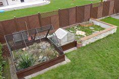 Tortoise House, Tortoise Habitat, Outdoor Tortoise Enclosure, Inside Design, Outdoor Furniture Sets, Outdoor Decor, Boarders, Popcorn, Gardens