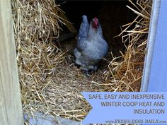 With much of the country facing record low temperatures over the next few days, please, please do your chickens a favor and get some extra straw into your coop. Stack bales along the walls and put a nice thick layer on the floor.