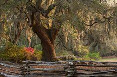 http://www.magnoliaplantation.com/gardens.html