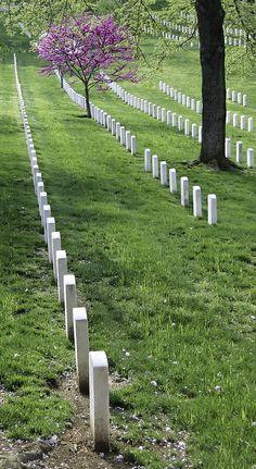 ˚Redbud Among Heroes - Arlington National Cemetery