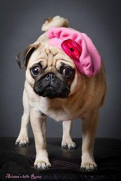 Puppies Fashion