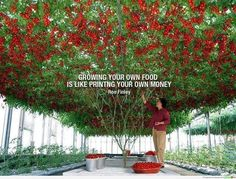 Grow some of your own food. Get gardening!