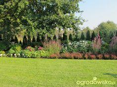 Ogród pod trzema dębami - strona 55 - Forum ogrodnicze - Ogrodowisko