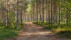 Photo Road through sunny forest by Matti Vinni on 500px