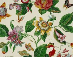 Composition : Papier Odalys Pierre Frey Colour: Red green Style: Botanical Type: Floral and botanical, Historical documents wide vertical Dining Room Wallpaper, Old Wallpaper, Fabric Wallpaper, Wallpaper Ideas, Framed Botanical Prints, Motifs Textiles, Chintz Fabric, Tropical Fabric, Hawaiian Quilts