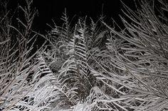 Fairy Tales, Instagram Images, Photos, Pictures, Fine Art, Wall Art, Winter, Artist, Artwork