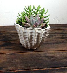 Succulent Planter // White Handmade Pottery // Graptoveria Opalina // Tetragona