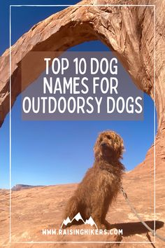 Naming a new pup? Plan to raise an outdoorsy dog who will hit the hiking trails with you? Check out these mountain lover dog names for the outdoorsy dog! We named our Labradoodle, Jasper after Jasper National Park. See the other names that were on our list! #hikingdogs #labradoodle #outdoordognames Mammoth Mountain, Mountain Dogs, Hiking Dogs, Hiking Trails, Strong Dog Names, Top Dog Names, North Cascades National Park, Family Adventure, Family Dogs
