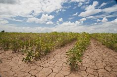 Extreme Weather Patterns Killing Vital Crops Across the Globe Extreme Heat, Extreme Weather, Irrigation, Agriculture, Joke Of The Year, Crop Insurance, Low Calorie Salad, Crop Production, Solar Shades