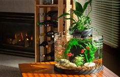 Product Code: EL01043 This stunning half circle glass aquarium will fit into any room in the home. The filter is designed to allow you to choose between standard or aquaponics filtration. Aquaponics f