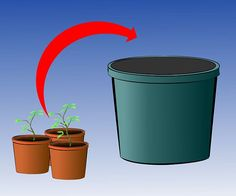 Grow Tomatoes in a Green House - wikiHow