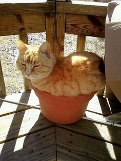 When your cat bush gets to about a foot in width, you're gonna want to re-pot it.