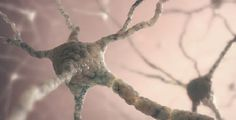 Scientists find new link between diabetes and Alzheimer's - neuroinnovations