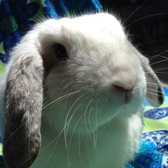 Albie the rabbit