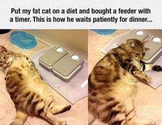 34 Funny Cat Pictures