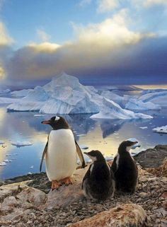 Penguins... Perfect shot