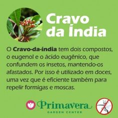 primavera-garden-cravo-da-india