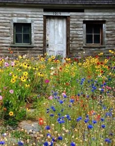Love all the wildflowers