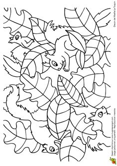 * Cache Cache Feuilles Ecureuils, page 6 sur 16 sur HugoLescargot.com Preschool Coloring Pages, Coloring Book Art, Doodle Coloring, Animal Coloring Pages, Colouring Pages, Coloring Pages For Kids, Adult Coloring, Fall Preschool Activities, Seasons Activities