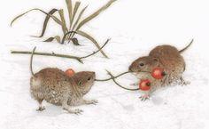 Petites Souris dans la Neige