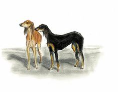 Saluki Vintage Style Print - Vintage Dog Drawings - 8x10 colored print on medium weight watercolor paper of my original pastel and pencil drawing. This drawing gives a nod to the canine etchings of the late 1800s but with the addition of a colored subject.  This is an open edition print that I will sign for you prior to shipping. Will be a handsome addition to any collection of sporting or canine art