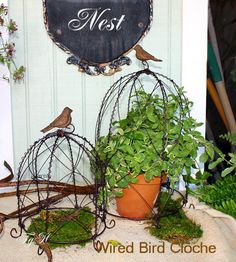 wire cloches at French Garden House