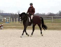 Evention Presents: Engaging the hind end « HORSE NATION