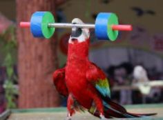 5 Tricks to Teach Your Pet Bird: Create Your Own Bird Tricks with Clicker Training