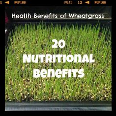 20 Nutritional Benefits of Wheatgrass
