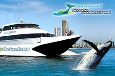 coupon from Whale Watching Gold Coast Brisbane