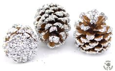 Frosty Pinecone Craft Step 5