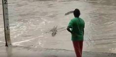 [VÍDEO] Mujer espanta cocodrilo a chancletazo limpio:...