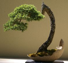 The ancient Japanese art of Bonsai creates a miniature version of a fully grown tree through careful potting, pruning and training. Even if you& not zen enough to labour over your own Bonsai,. Bonsai Plants, Bonsai Garden, Garden Plants, Bonsai Trees, Pine Bonsai, Bougainvillea Bonsai, Ikebana, Plantas Bonsai, Bonsai Forest